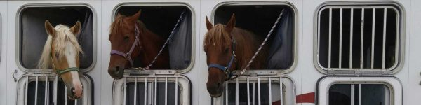 H. R. 1400, Horse Transportation Safety Act of 2019