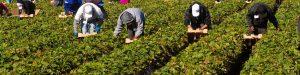 H. R. 5038 Farm Workforce Modernization Act of 2019