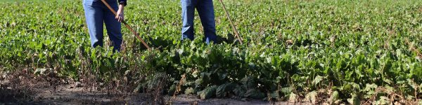 H. R. 4916, Terms and conditions for nonimmigrant workers performing agricultural labor